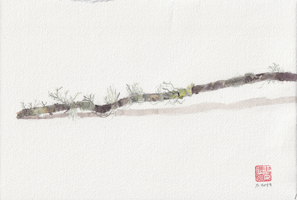 Twig with Lichen. Tassajara - watercolor sketch