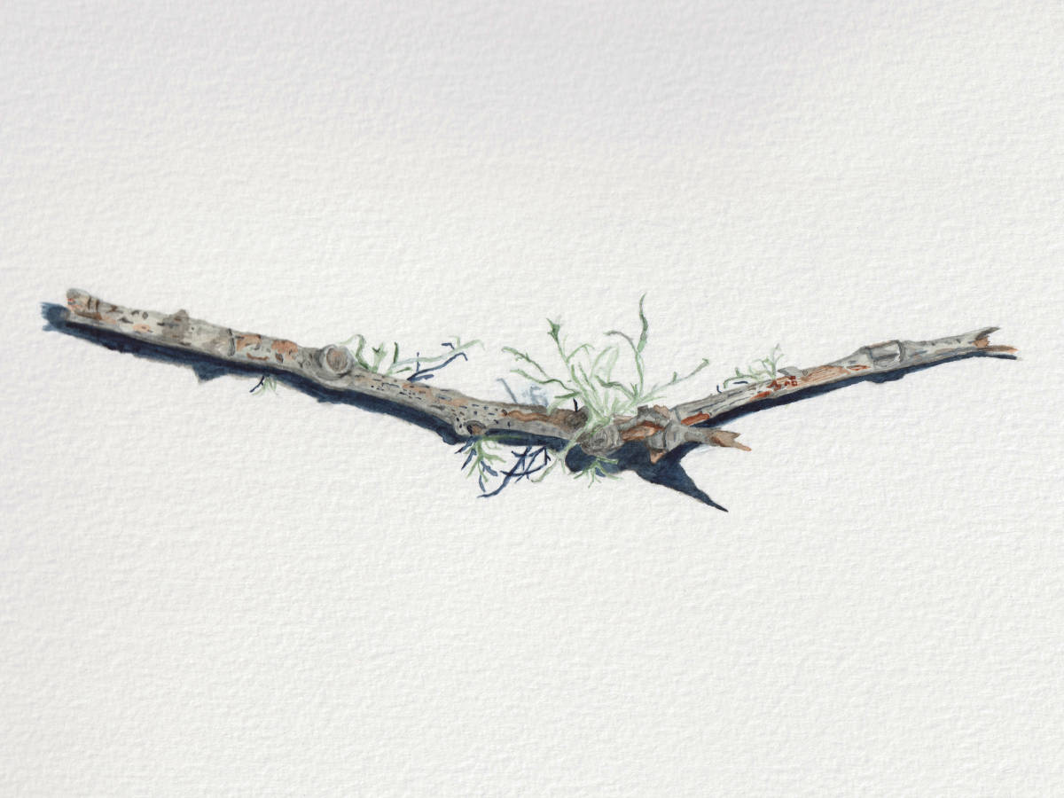 Broken Branch with Lichen