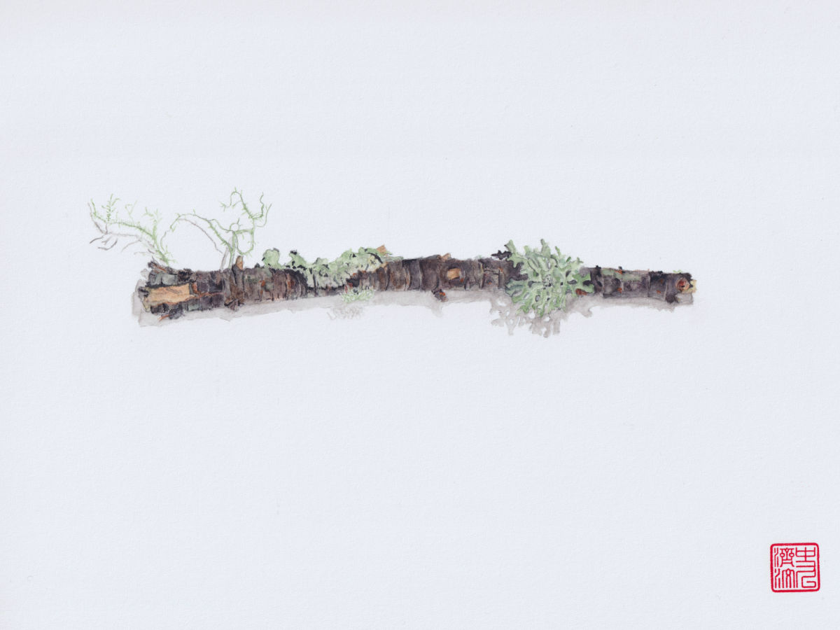 Short Branch With 5 Lichens. watercolor illustration