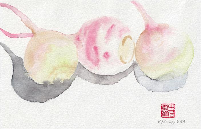 Watermelon Radish - QuickStudy Composition 1 - watercolor sketch